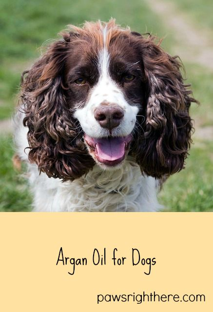 Argan Oil For Dogs Paws Right Here