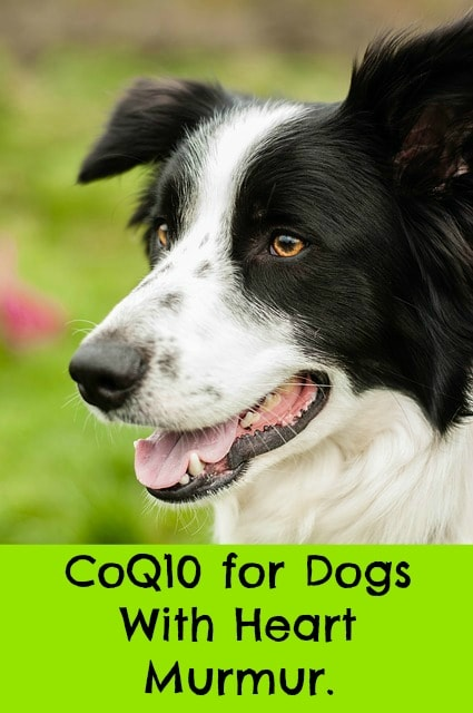 Enalapril For Dogs With Heart Murmur