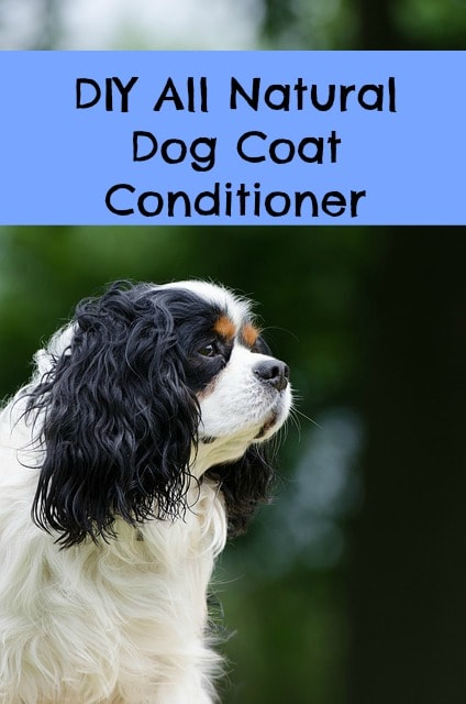 Best Dog Coat Conditioner Paws Right Here