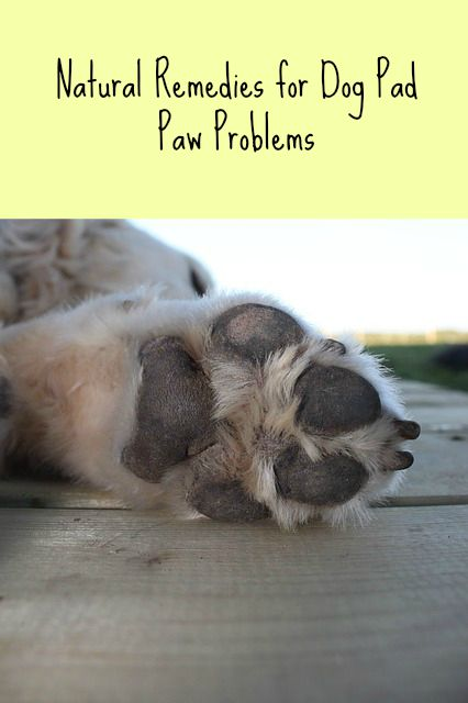 Dog Paw Pad Problems Paws Right Here