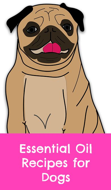 essential oil recipes for dogs