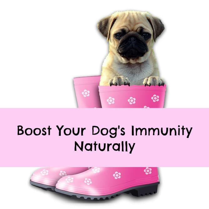 immune supplements for dogs