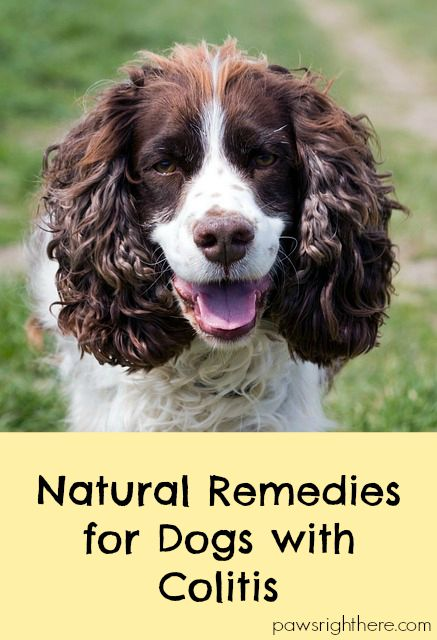 Best Dog Food For Dogs With Colitis