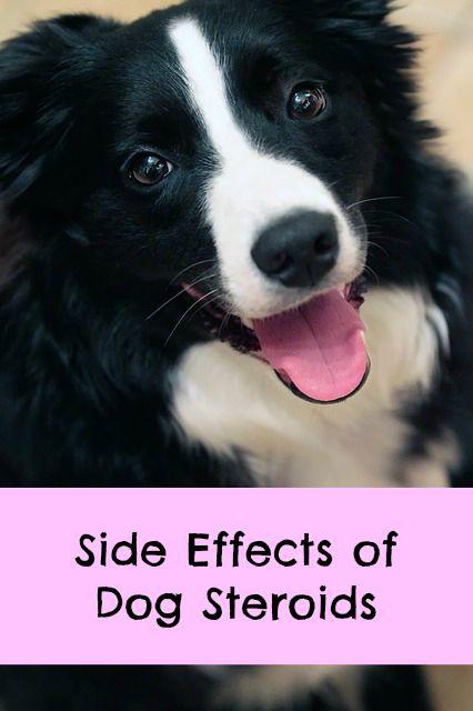 Car Barrier For Large Breed Dog