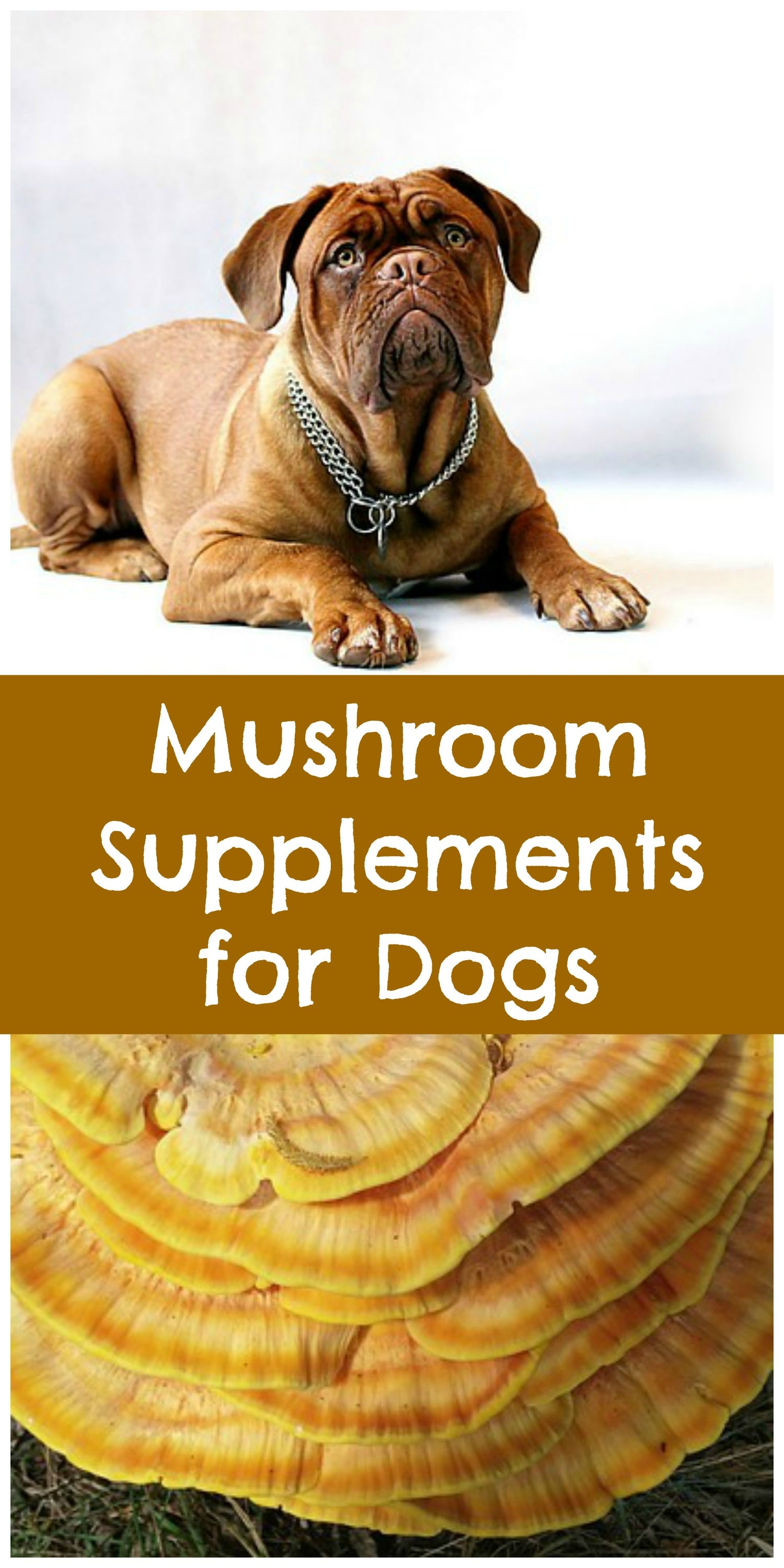 Mushroom Supplements For Dogs Paws Right Here