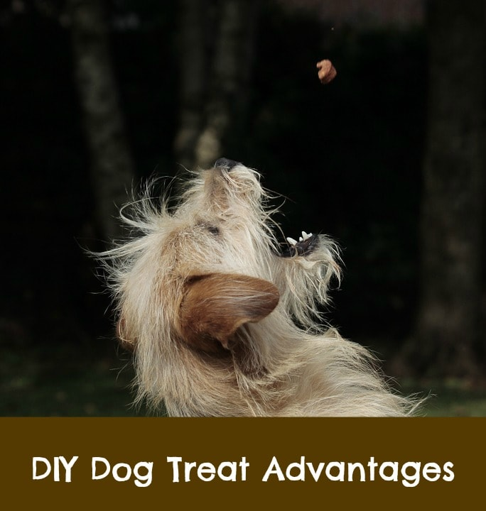make your own dog treats food