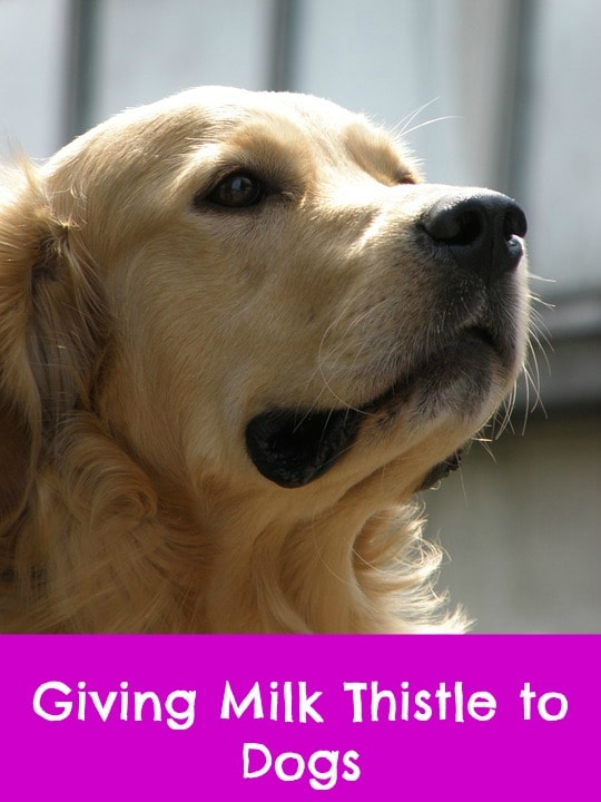 where to buy milk thistle for dogs
