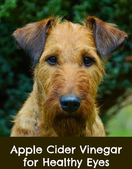 Apple Cider Vinegar Dog Conjunctivitis Paws Right Here