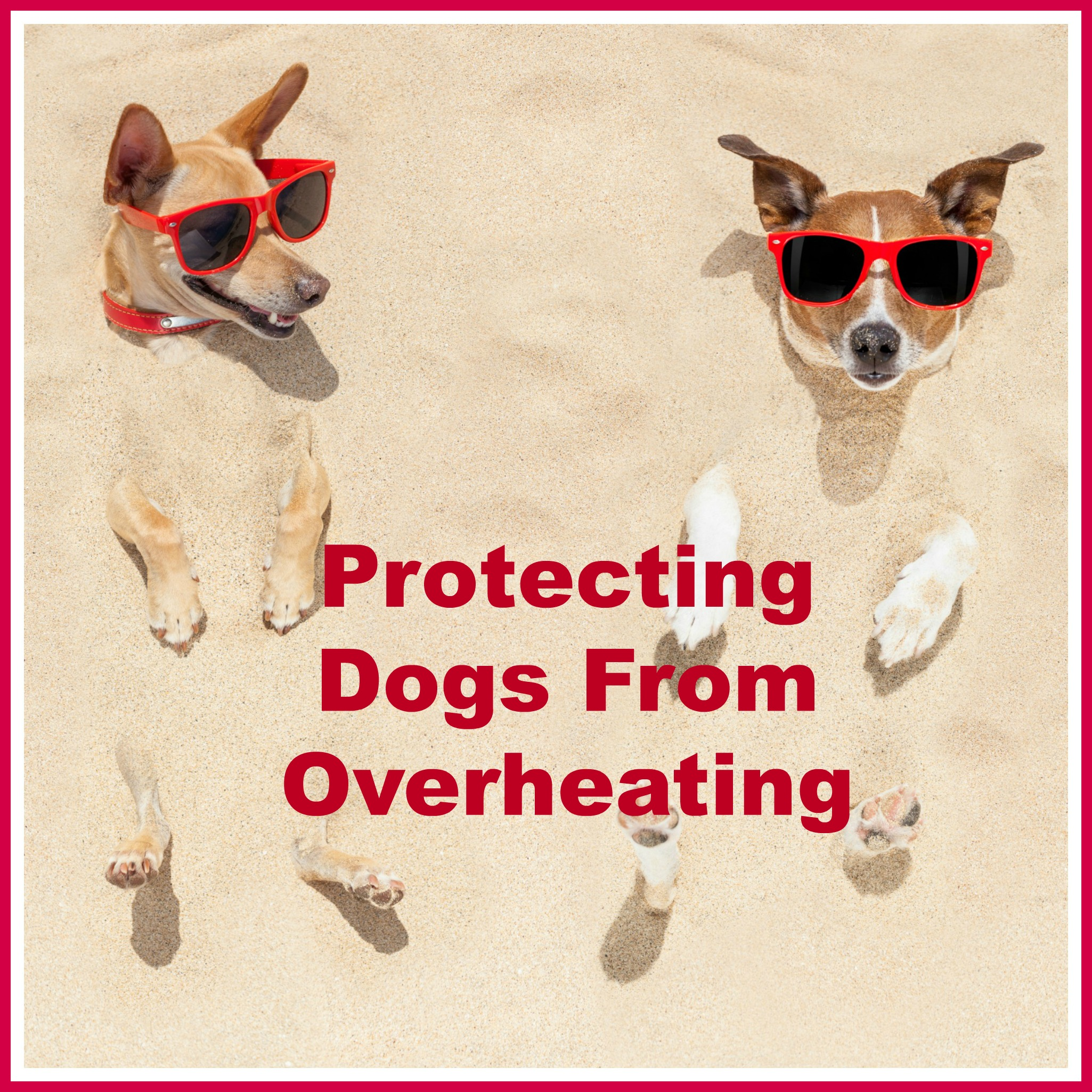 Protecting Dogs In The Heat Paws Right Here