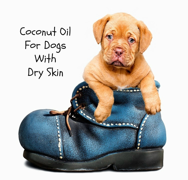 coconut oil for dogs with dry skin