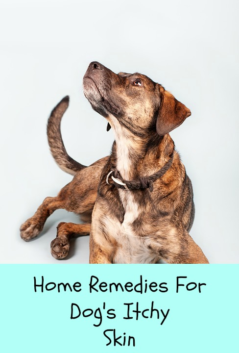 Dog Itch Relief Home Remedies Paws Right Here