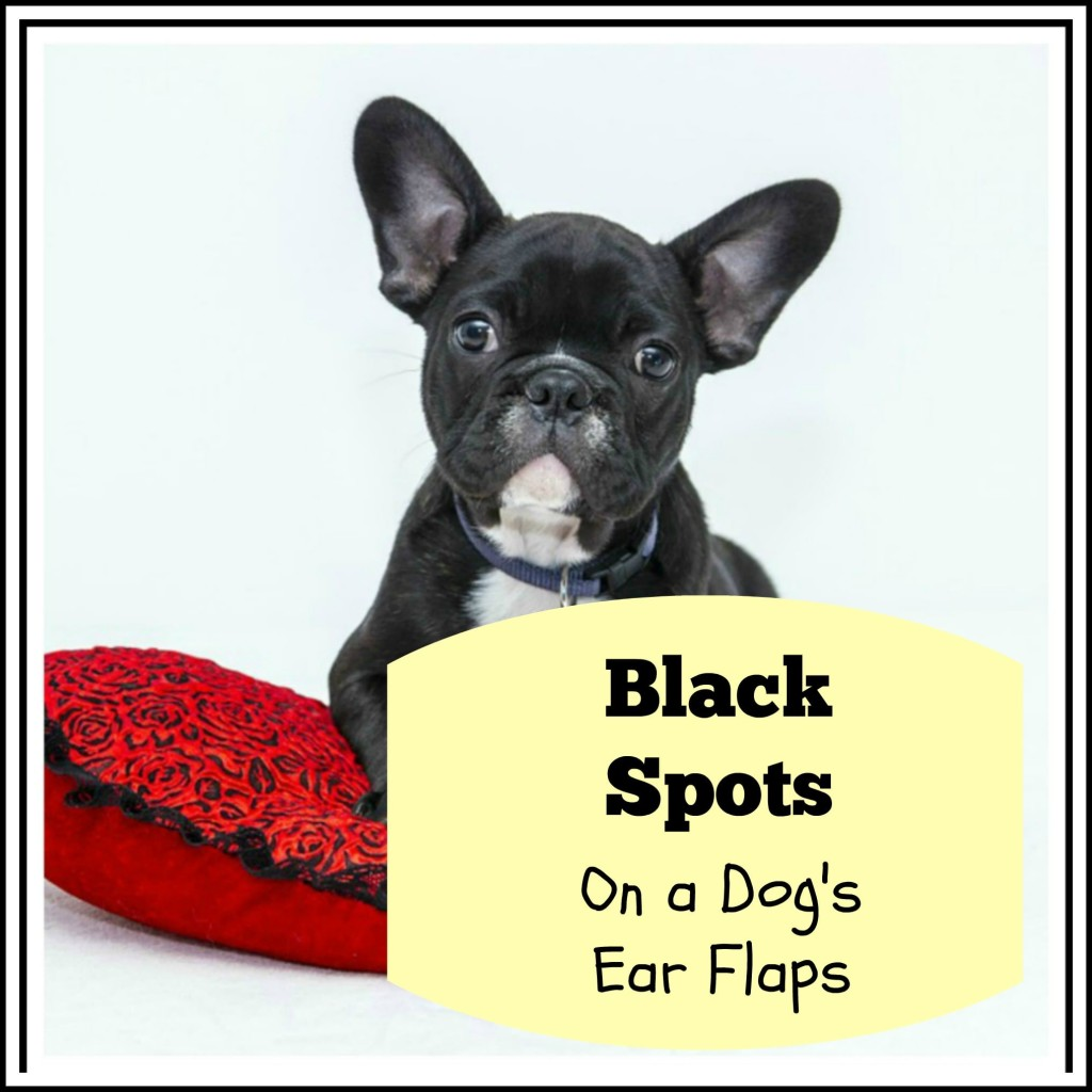 Black Spots on a dog's ear flaps