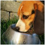 Pros And Cons Of A Grain Free Diet For Dogs